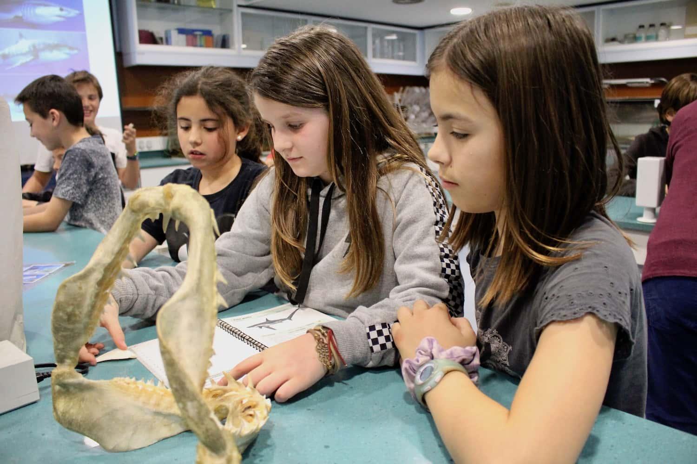 Els Alumnes De Primària, De Visita A L'Aquarium De Barcelona