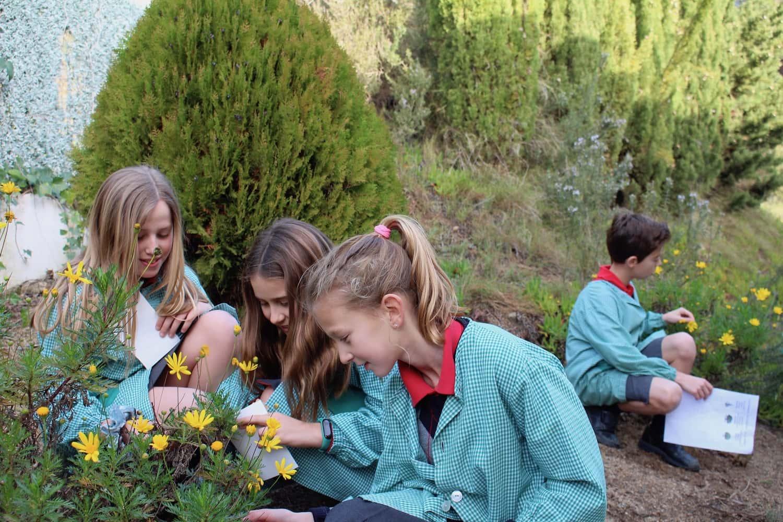 El Grupo De 4º De Primaria Explora El Jardín Para Aprender Los Tipos De Hojas